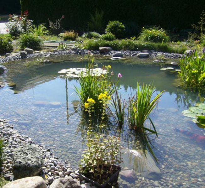 Teiche zum schwimmen teiche f r ihre kois teiche zum for Koi und goldfische in einem teich